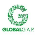 Kål fra Svinningegård er GlobalG.A.P certificeret