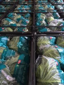 Salatkål pakket på høstvogn.